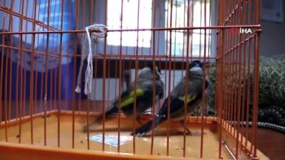 kalamis -  Yasak avlanan saka kuşlarını zabıta özgürlüğüne kavuşturdu