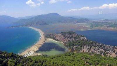 caretta caretta - Caretta caretta plajının işletmesi belediyeye emanet - MUĞLA