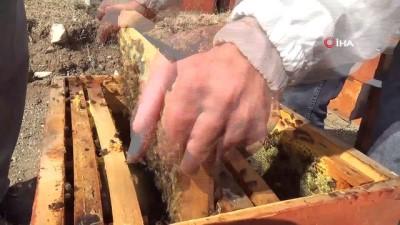Ağrı'da bal hasadı başladı