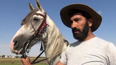 Cirit atları derede serinliyor - KARS