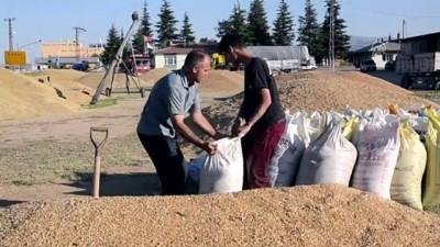 Hububat fiyatları çiftçiyi sevindirdi - KONYA