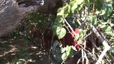 Gölgesine bıraktığı dut ağacı aracını pert etti