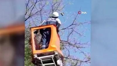 yuksek gerilim hatti -  Diyarbakır'da ağaca takılan kumruyu Dicle Elektrik ekipleri kurtardı