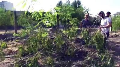 siyasi parti - HDP'li belediyenin ağaç kesimine tepki - BATMAN