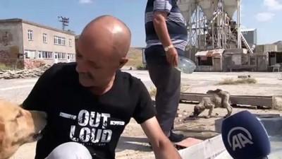 Sıcaktan bunalan sokak köpeklerini yaptığı havuzda serinletiyor - KIRIKKALE