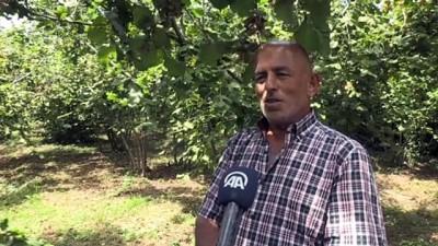 findik hasadi - Fındık üreticisi bahçeye mutlu girdi - DÜZCE