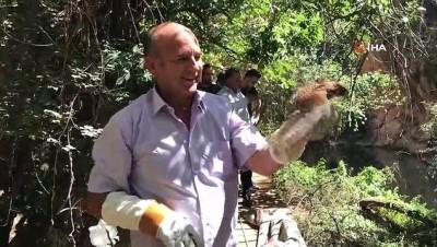 (DENİZLİ Hayvansever işçi ölmek üzere olan Kerkenek kuşuna 25 gün baktı