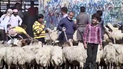 buyukbas hayvanlar - Irak'taki ekonomik durum kurbanlık piyasasını da etkiliyor (2) - ERBİL