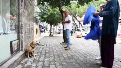 yerel gazete - Yağmurda ıslanan köpeği kıyafetiyle kuruladı - MUĞLA