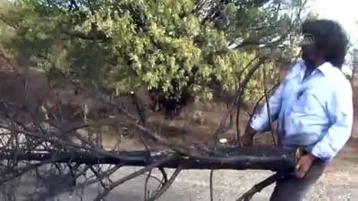 Yangınlara dikkat çekmek için yanmış çam ağacını kente taşıdı - ERZİNCAN