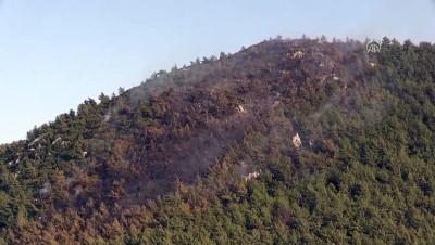Bodrum'da orman yangını (3) - MUĞLA