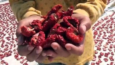 İtalyan lezzetlerine Türk domatesi - İZMİR