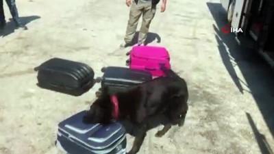 Yolcu valizinden 5 kilo uyuşturucu çıktı