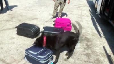 Yolcu valizinden uyuşturucu çıktı - GAZİANTEP