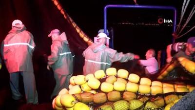 Balıkçılar bu kez boş dönmedi, hamsi fiyatı 10 liraya düştü