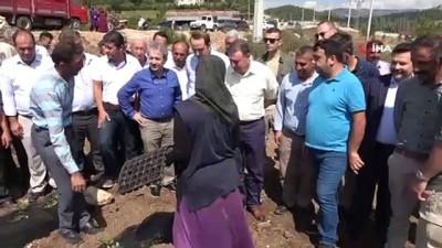 Hatay Büyükşehir Belesiyesi'nden çiftçilere fide desteği