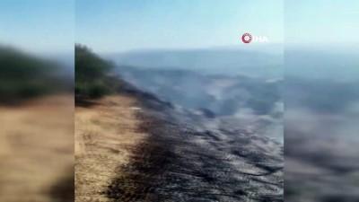 zeytinlik -  Samandağ'da zeytinlik alanda yangın çıktı