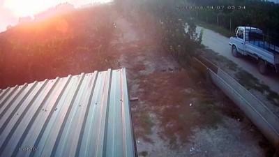 kalamis - Koyun hırsızları kameraya yakalandı - ADANA