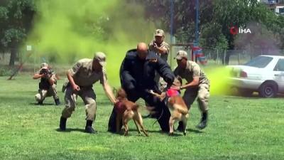 Jandarmanın operasyon köpekleri suçlulara göz açtırmıyor