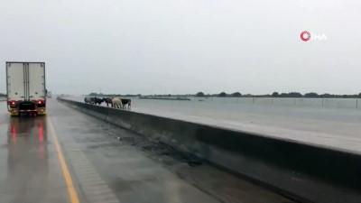 felaket -  - Imelda Tropikal Fırtınası Teksas'ı Vurdu: 2 Ölü