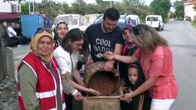 findik toplama - Özel eğitim sınıfı için fındık bağışı - TRABZON