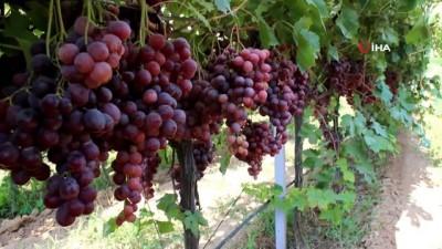 organik tarim -  Alaşehir'de 300 üretici iyi tarım uygulamaları yapıyor
