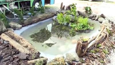 Havuz ve göletleri bitkilerle temizliyorlar - SAKARYA