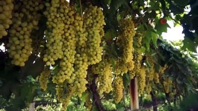 Kuru üzüm fiyatına müdahale üreticiyi sevindirdi