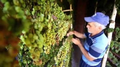 Toroslar'ın zümrüdü: 'Yeşil gök üzüm' - KONYA