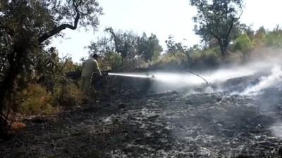 makilik alan - Kemalpaşa'da orman yangını - İZMİR
