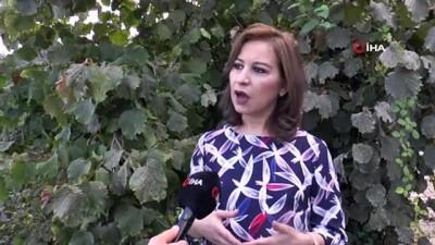 medya kuruluslari -  Türk fındığına kara propaganda