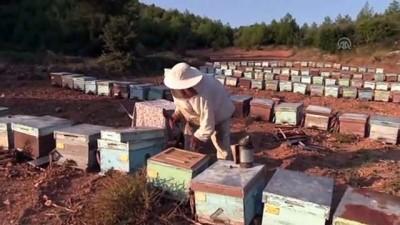 kimya - 'Biyolojik kirlilik arı ölümlerini artırıyor' - MUĞLA
