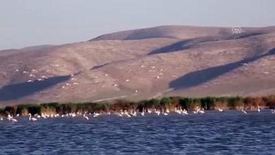 Rehabilite edilen gölet kuş sesleriyle şenleniyor - KONYA