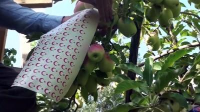 Ay yıldızlı 'uzun elmalar' ilgi görüyor - KARS