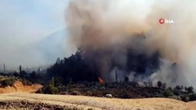 zeytinlik -  Hatay'da çıkan orman yangını kontrol altına alındı