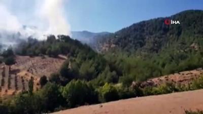 zeytinlik -  Hatay'da orman yangını