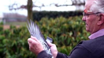 - 1,4 Milyon Dolarlık Güvercinin Yavruları Şampiyon Olmak Üzere Yetişiyor