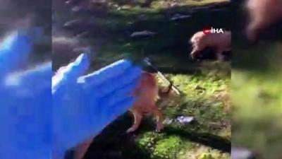 Dağa bırakılan sokak köpeklerini bulunca gözyaşlarına hakim olamadı