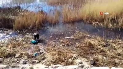 Kıyıya akın eden balıkları kasalarla yakaladılar