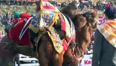 Pehlivan develer kozlarını Germencik Arenası'nda paylaştı