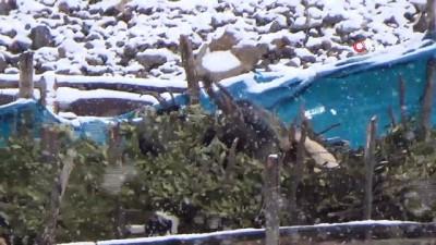 Beytüşşebap'ta kar yağışı hayatı olumsuz etkiledi