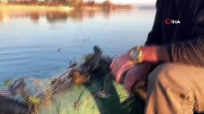 amator -  Sapanca Gölü'ndeki 'hayalet ağ' konusunda delil bulunamadı