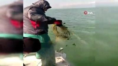 Eğirdir Gölü'nde kaçak avlanan 100 kilogram canlı kerevit göle geri bırakıldı