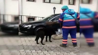 kopek -  Temizlik işçisinin sokak köpeklerine süpürgeyle masaj yaptığı anlar kamerada