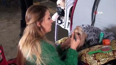 yaris -  Kuşadası'nda köpek ırkları yarışması başladı