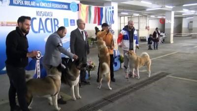 Köpek ırkları yarışması sona erdi
