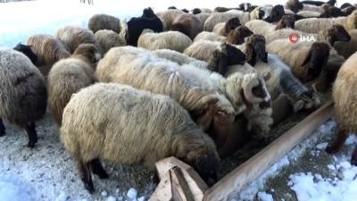 Muş'taki dağ köyleri kar altında kaldı