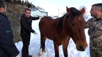 Ölüme terk edilen atı jandarma kurtardı