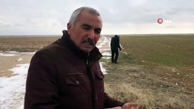 kopek -  Aksaray'da yavru köpekler soğukta ölüme terk edildi
