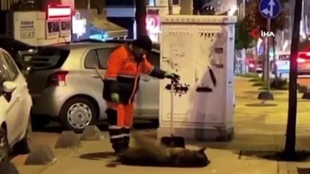 temizlik gorevlisi -  Temizlik işçisi ile sokak köpeği arasındaki sevgi bağı duygulandırdı